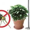 Stop alle zanzare con le piante