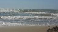 Fare Verde: volontari in azione in spiaggia