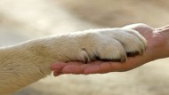 Pet- teraphy in ospedali, case di riposo e comunità di recupero