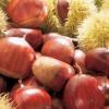 L'autunno profuma di castagne