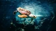 Ecosistemi marini: ecco come cambiano