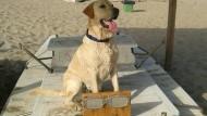Contro l'abbandono: cani a bordo a 5 Euro