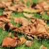 Oggi, primo giorno di autunno