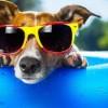 Sabato 24 Giugno: Apericena da cani