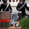 Coltivavano marijuana, ai domiciliari un apriliano e la sua convivente romena