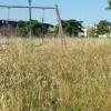 Cura aree verdi, i residenti del Quartiere Agroverde chiedono interventi dietro Conforama