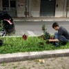 Rose a Largo delle Rose! Iniziativa di Europa Verde e Aprilia Possibile.