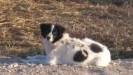 Bimba, cagnolina scomparsa. L'appello di Amici di Birillo.