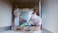 Aprilia: beccato nuovamente a trasportare carne violando le normative.