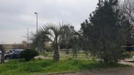 Covid-19, nuova ordinanza: chiusi parchi e giardini, sport solo vicino casa.