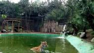 """Zoo delle Star di Aprilia: """"Ci serve aiuto per mantenere i nostri animali""""."""