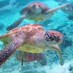 Polinesia, Paradiso Tropicale