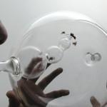 L'ape: il segugio del tumore