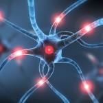 Scoperta la causa della sclerosi multipla
