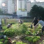 Aprilia, assegnazione orti pubblici urbani