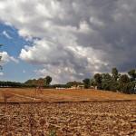 Compost naturale agricolo la causa del cattivo odore