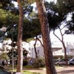Centauro si schianta contro un albero in Via delle Marghetite