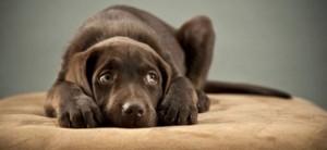 capodanno cane