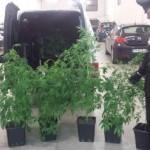 20 kg di marijuana e 96 piante: 2 arresti ad Aprilia
