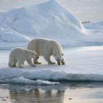 Artico: effetto serra anche in Inverno