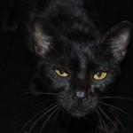 Il gatto dagli occhi d'oro