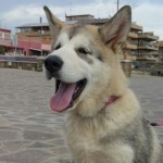 Esposizione canina a Selciatella