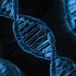 Riparazione DNA: identificato un nuovo gene