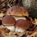 8 passi per evitare l'avvelenamento da funghi