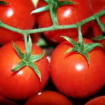 Truffa da 360mila euro in…pomodori
