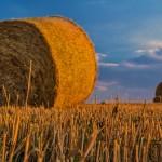 Agricoltura: nuova vita per i vecchi casali