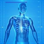 Osteoporosi, la cura nelle cellule staminali