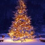 Perché si fa l'Albero di Natale?