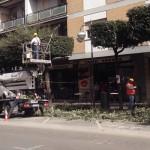Da gennaio via alle potature degli alberi in via degli Aranci e Corso Giovanni XXIII