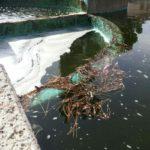 Fontana sporca in Piazza Roma: proteste sui social