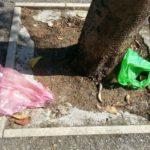 Cani e strade pulite: bene ma non benissimo