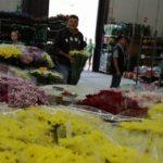 Il Mercato dei Fiori di Aprilia compie 13 anni