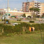 Iniziati stamattina i lavori di potatura in zona Toscanini
