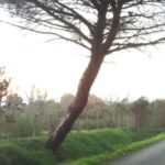 Alberi pericolosi in Via Pantanelle