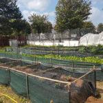 In vendita alla serra fotovoltaica le prime fragole di stagione