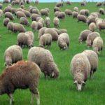 Sicurezza alimentare: controlli a tappeto in tutto il Lazio