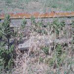 Il disastro del parco a Selciatella