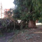 Pericolo nel Parco del Progresso: cadono rami dagli alberi