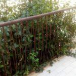 """Mancate potature: la rabbia di alcuni apriliani per gli alberi """"invadenti"""""""