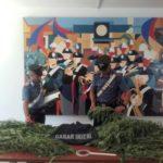 Sequestrate 11 piante di marijuana, in manette 50enne di Campoverde