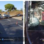 Albero caduto sulla Pontina: 4 veicoli coinvolti