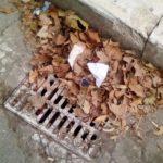 Scoli otturati dalle foglie, Pina Ricci denuncia il rischio di nuovi allagamenti
