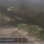 Pontina, cade albero in carreggiata per il troppo vento