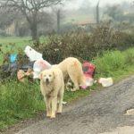 Non si arresta l'abbandono selvaggio della spazzatura