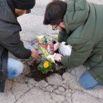 Fiori nelle buche, la protesta innovativa di Aprilia Possibile