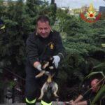 I Vigili del Fuoco salvano due cuccioli rimasti intrappolati in un tombino